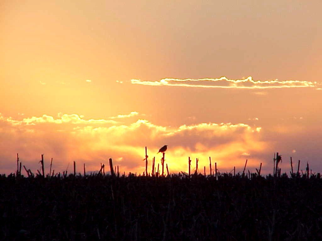 Bev Meyer: Bird at Sunrise. Monroe County.