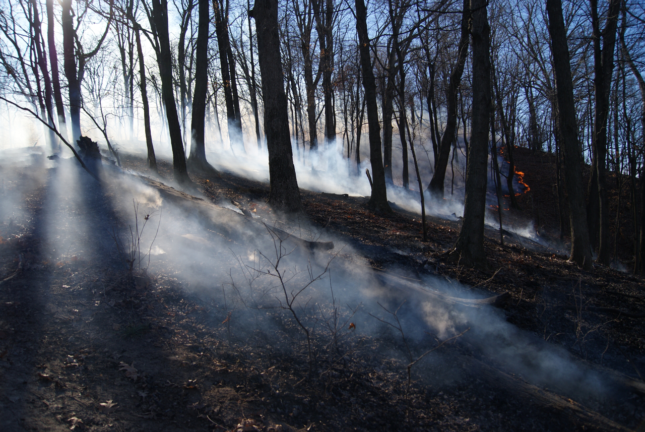Semi-finalist entry. Eric Fries: Prescribed Burn, Salt Lick Point Land & Water Reserve. Monroe County.