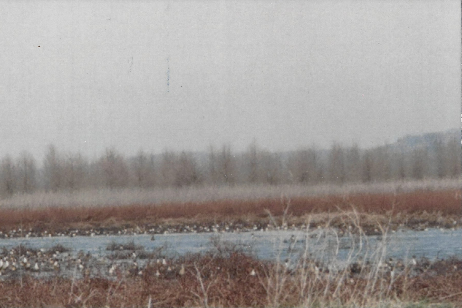 Charles Frederick: Migration at the Marsh. Monroe County.