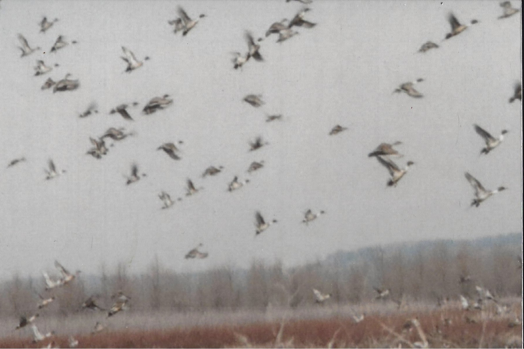 Charles Frederick: Migration at the Marsh 2. Monroe County.