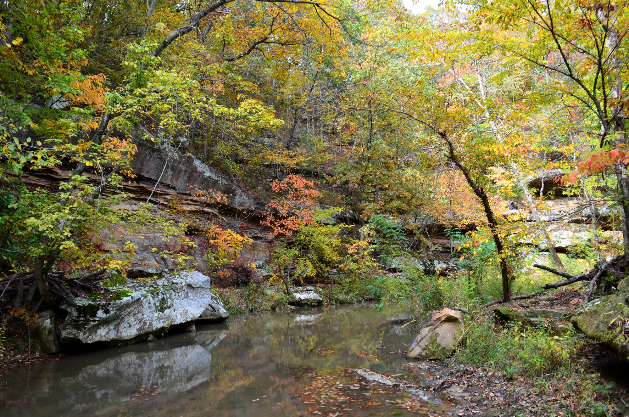 Selected for display. Chris Benda: Piney Creek Ravine. Randolph County.