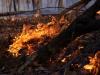 Eric Fries: Prescribed Burn, Salt Lick Point Land & Water Reserve 2. Monroe County.