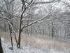 Joann Fricke: Winter Prairie 2. Monroe County.