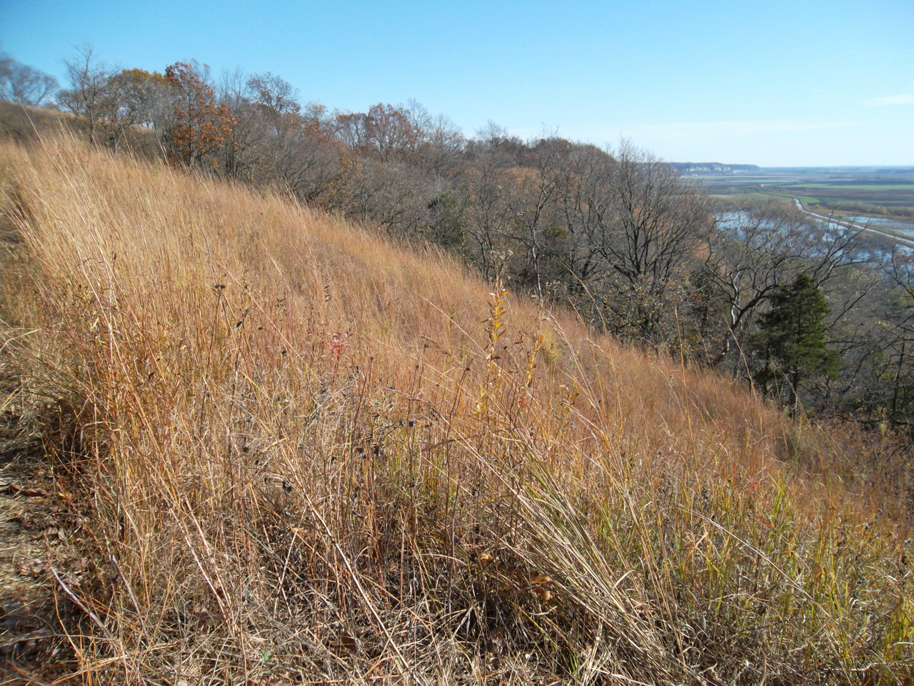 Laura Schaefer: Veteran\'s Day Hike at Fults Hill Prairie Nature Preserve. Monroe County.