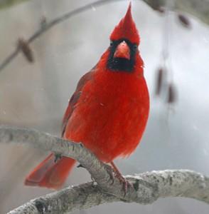cardinal, P. Feldker
