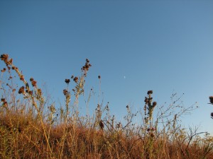 prairie moon, M. Kemper
