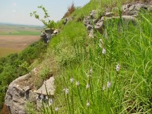 hill prairie & verbena, M. Kemper