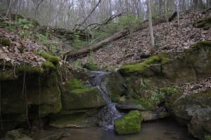 woodland spring, P. DauBach