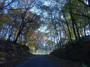 woods landscape, D. FitzWilliam
