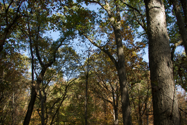 Stemler Cave Woods, P. DauBach