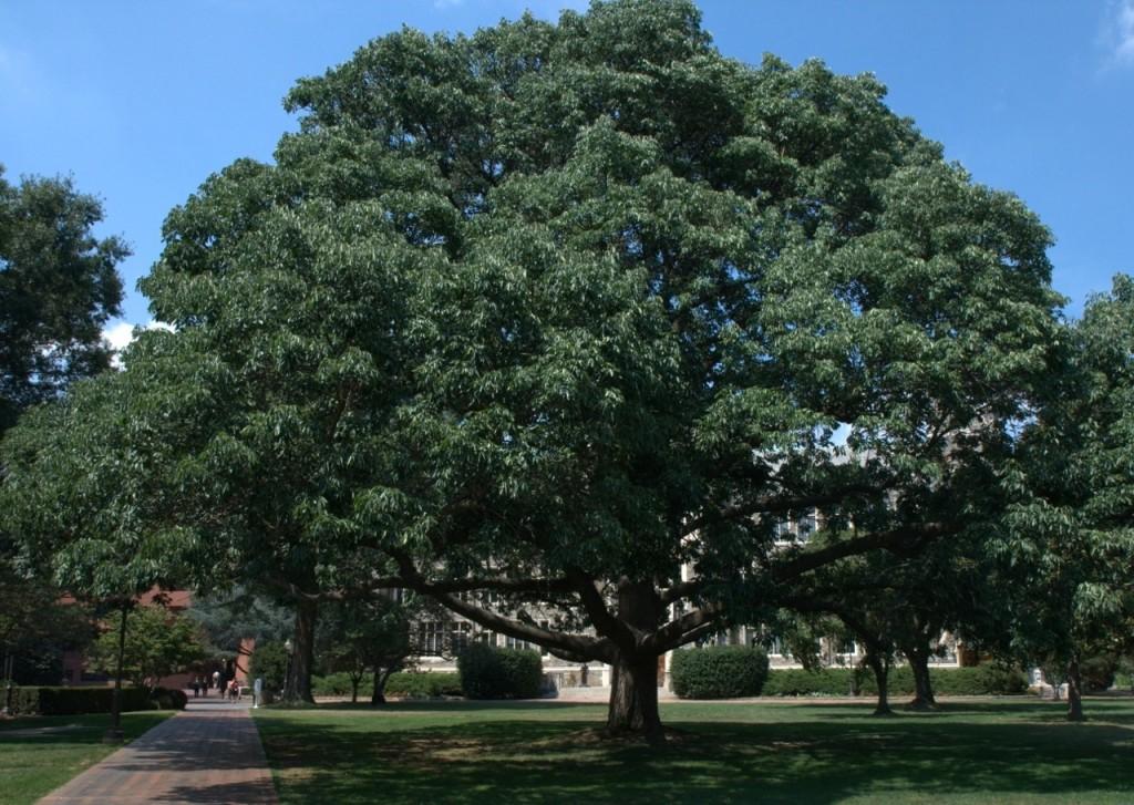 ash tree, D. Cappaert photo