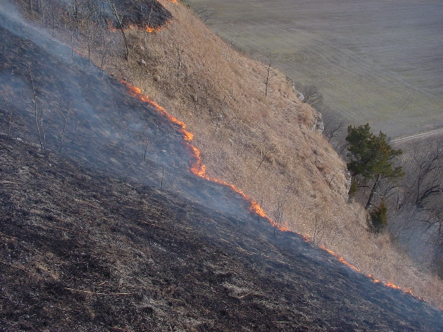 hill prairie burn, M. Kemper photo